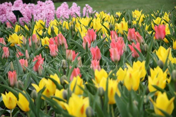 tulipshow05