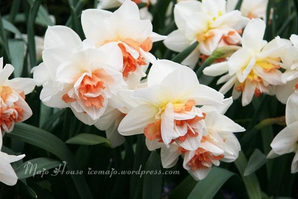 tulipshow14