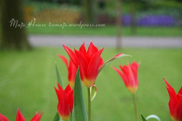 tulipshow20