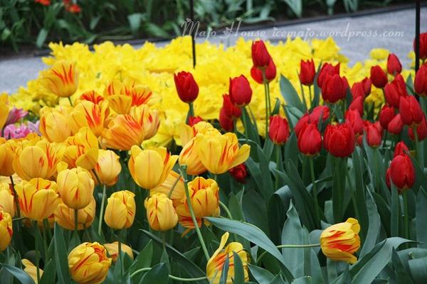 tulipshow79