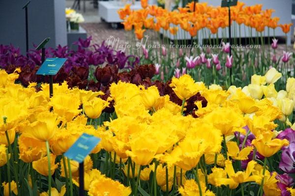tulipshow83