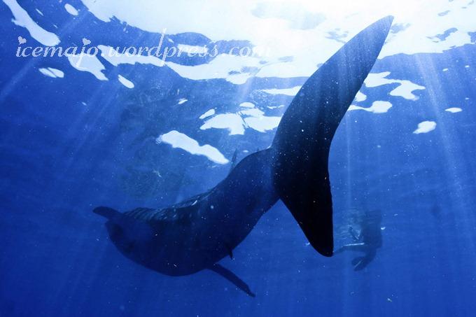 Whaleshark-49