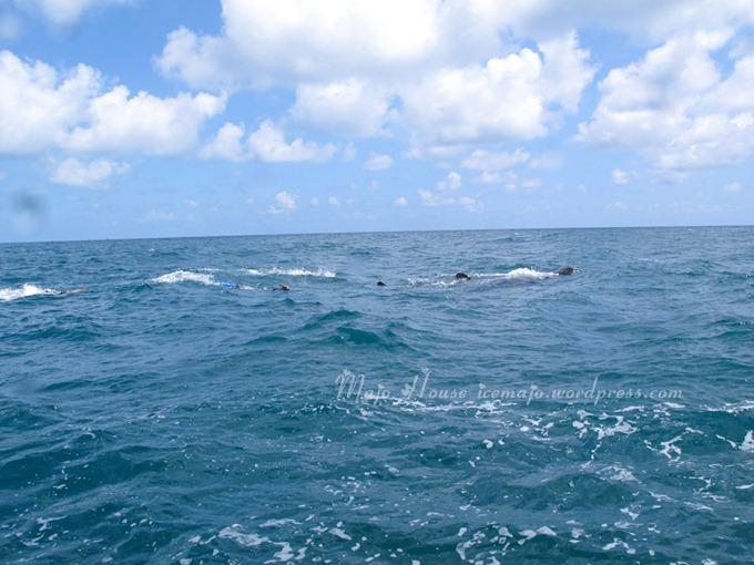 whaleshark007