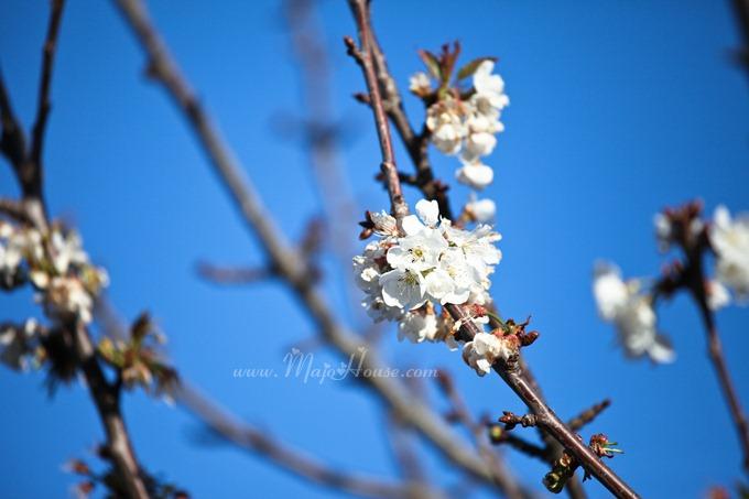 garden04142012_01