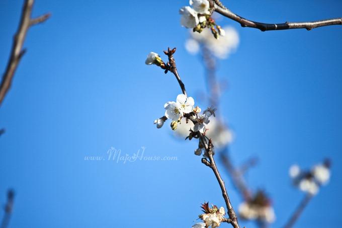 garden04142012_02