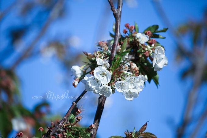 garden04142012_04
