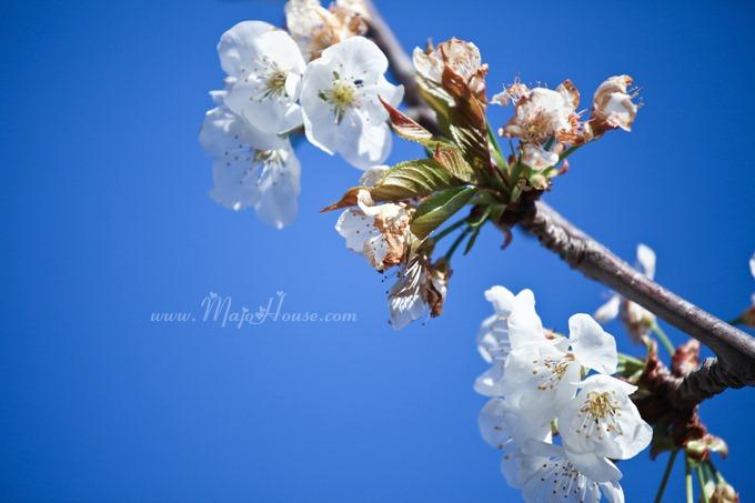 garden04142012_05