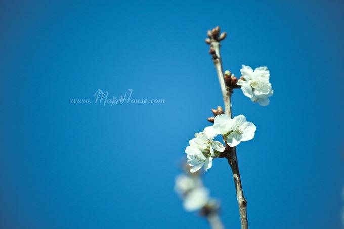 garden04142012_08