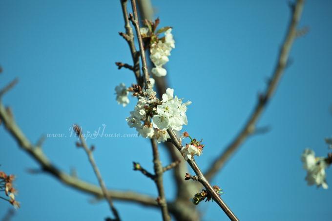 garden04142012_11