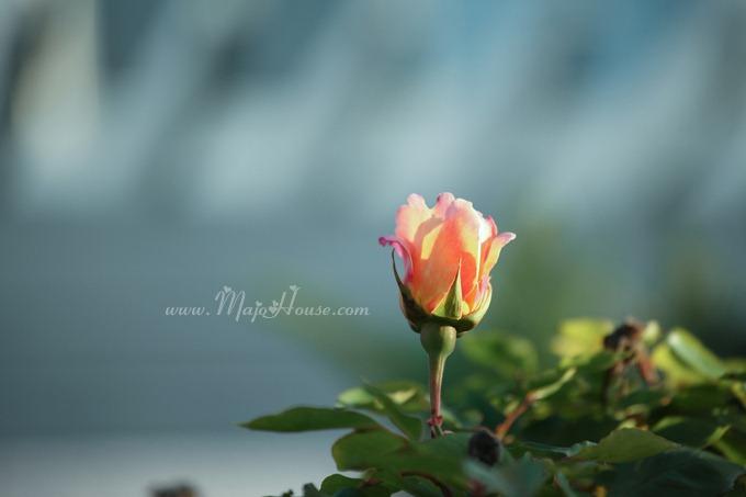 garden04142012_12