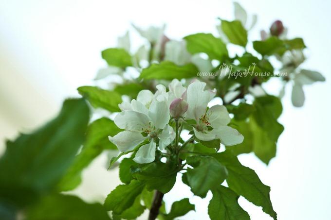 garden04142012_13