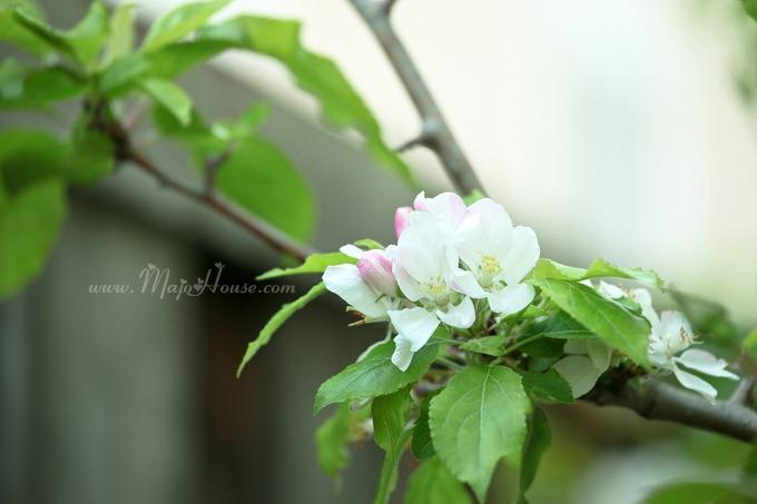 garden04142012_14