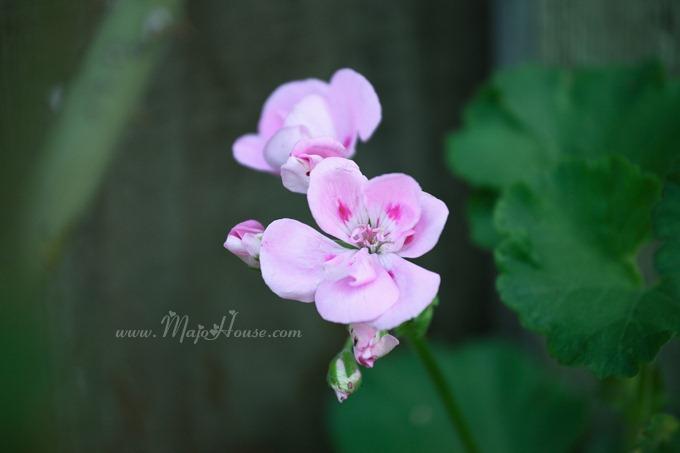 garden04142012_17