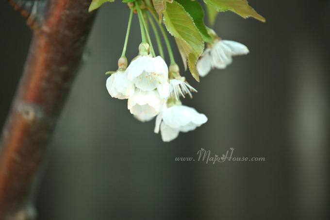 garden04142012_18