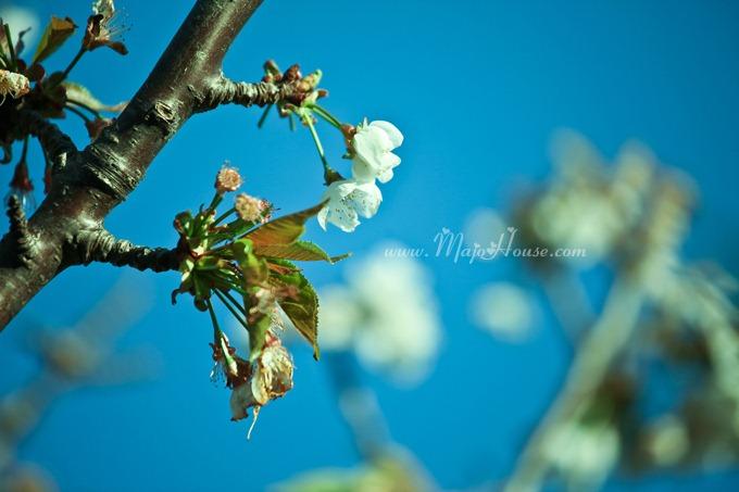 garden04142012_19
