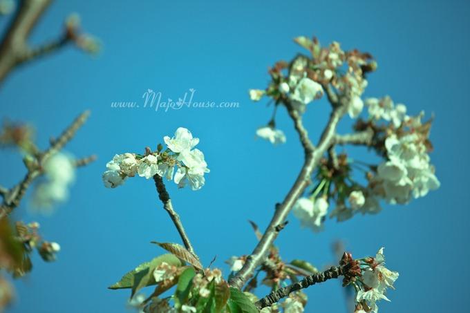 garden04142012_23