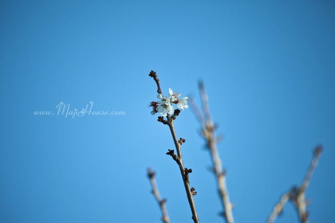 garden04142012_26