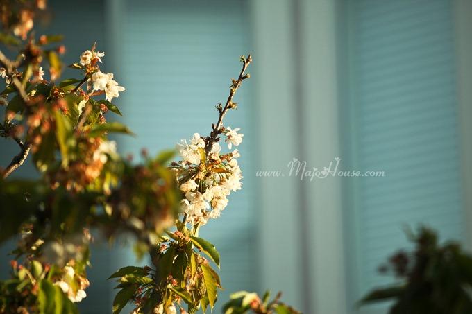 garden04142012_29