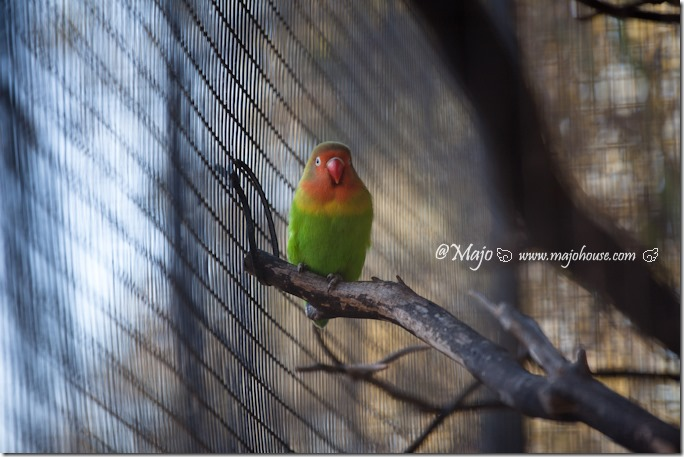 MajoHouse_BlogPhoto