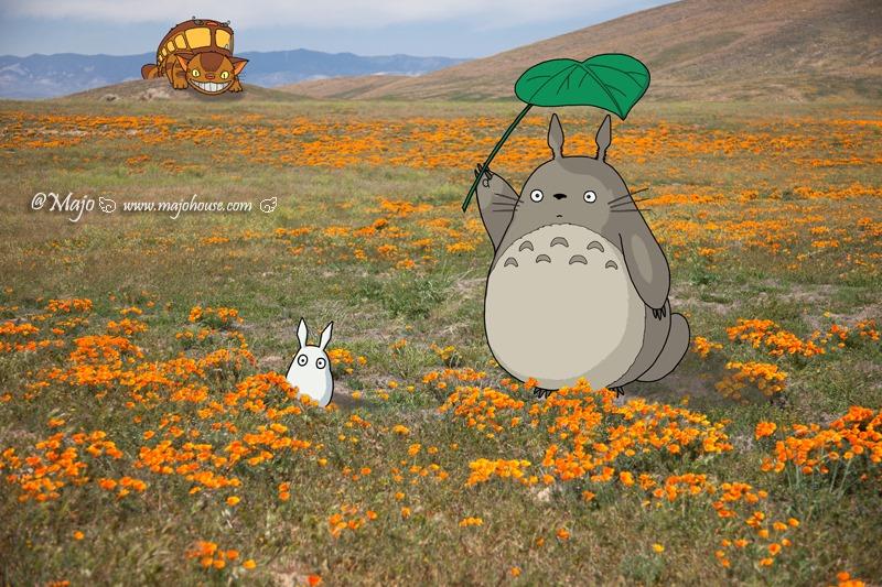 Antelope_Valley_Poppy_Reserve_00_totoro