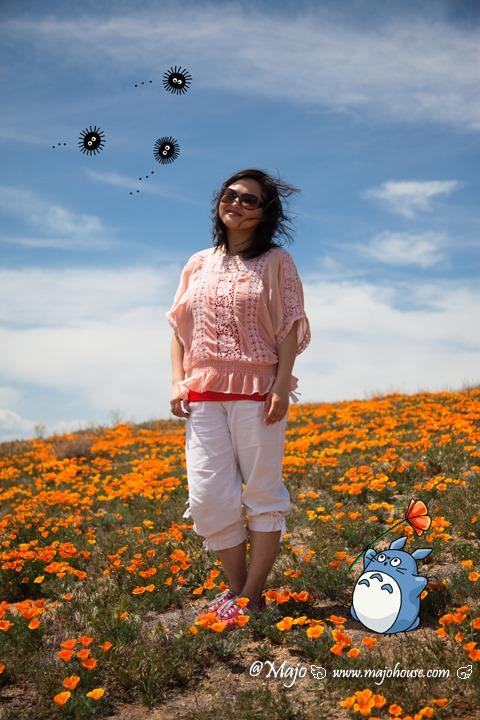 Antelope_Valley_Poppy_Reserve_14_majontotoro