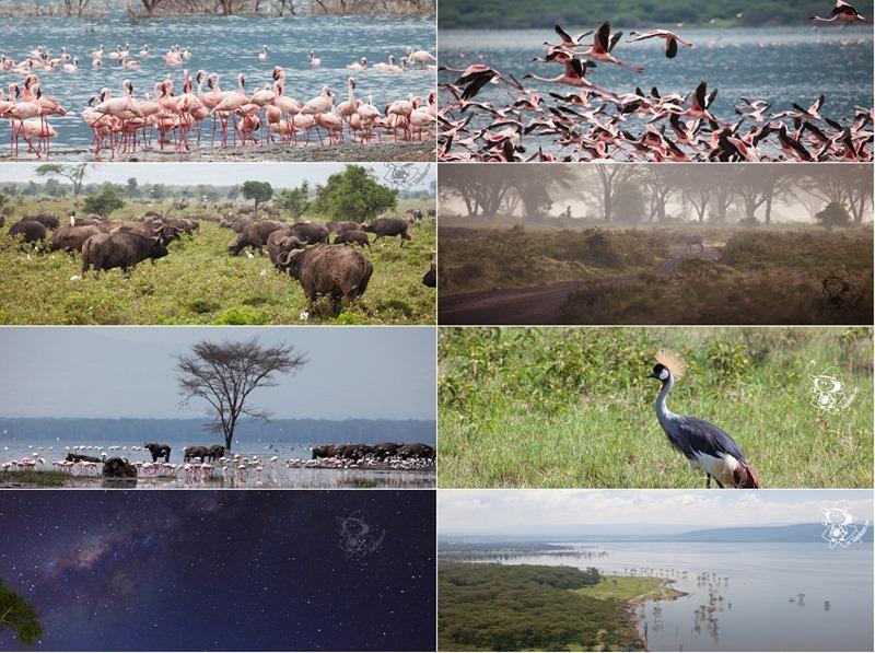 Kenya_Safari000b