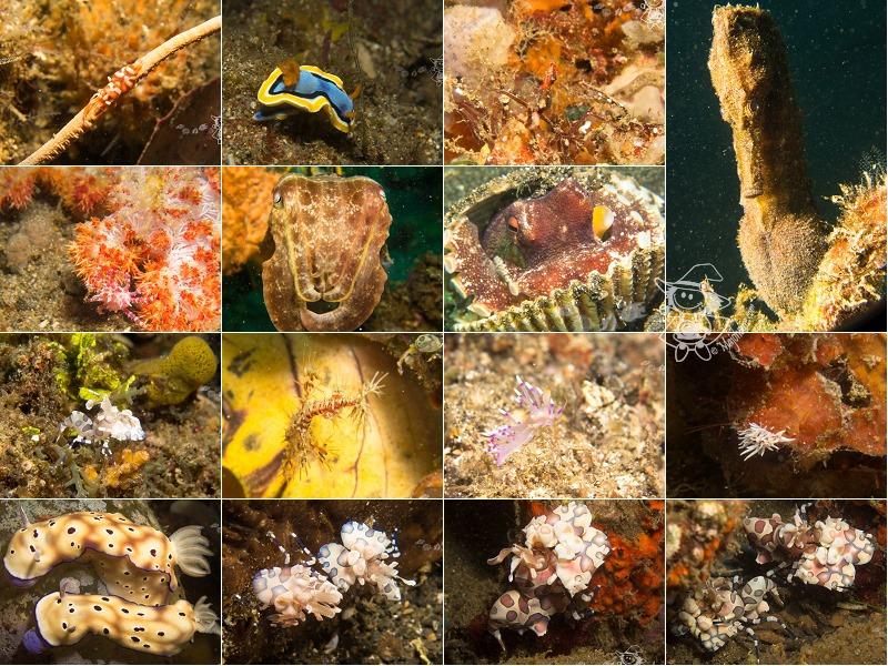 LembehStrait_diving158