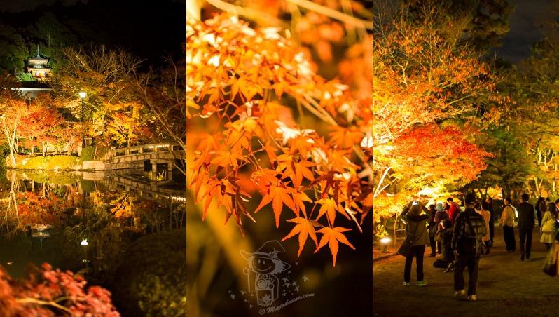 Kyoto_Eikando_Night-Foliage