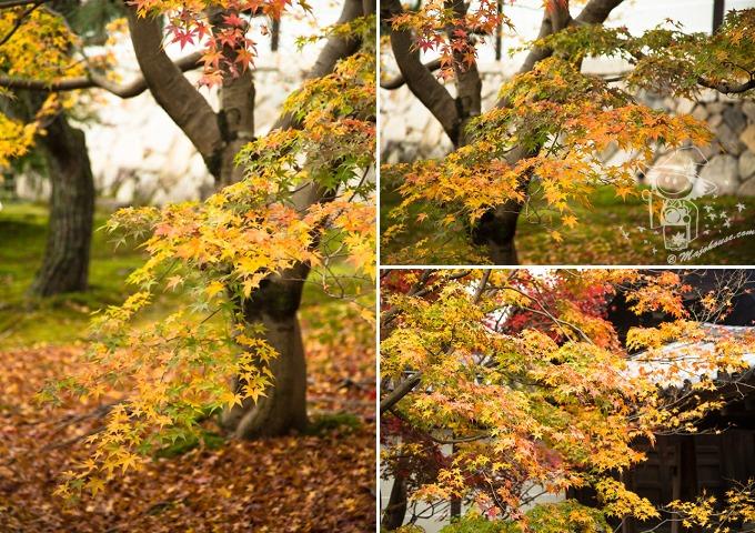 Kyoto_Tofuku-Ji_08