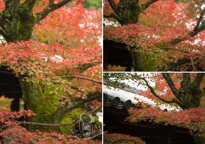 Kyoto_Tofuku-Ji_51