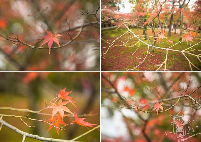Kyoto_Tofuku-Ji_58