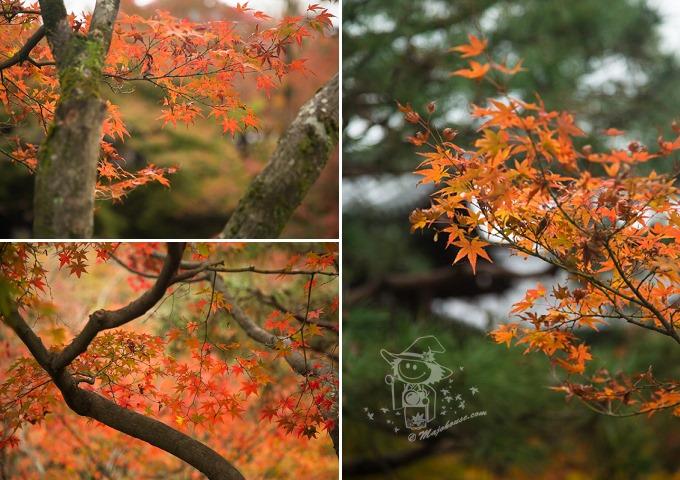 Kyoto_Tofuku-Ji_67
