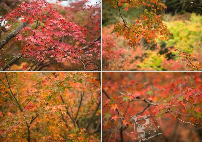 Kyoto_Tofuku-Ji_76