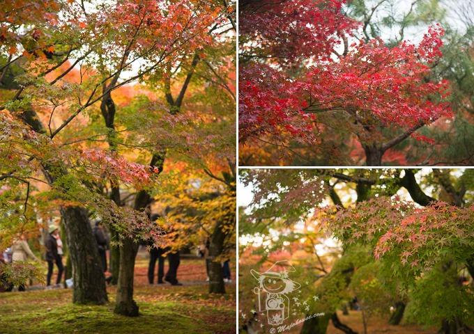 Kyoto_Tofuku-Ji_87