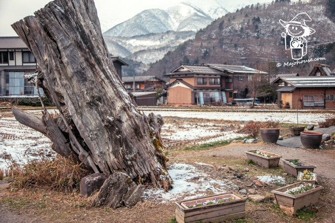 Majo Photograph